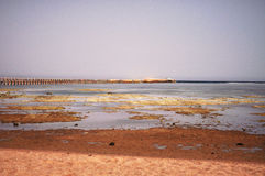 Havet sina Royaltyfria Foton