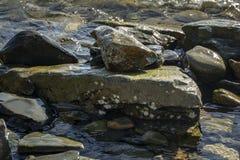 Havet stenar och vaggar av olik format och texsture av svart, grått och brunt på den Black Sea kusten som naturbacground arkivbild