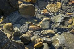 Havet stenar och vaggar av olik format och texsture av svart, grått och brunt under vattnet på den Black Sea kusten royaltyfria foton