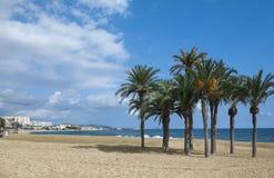 Havet, stranden och kokosnöten gömma i handflatan Fotografering för Bildbyråer