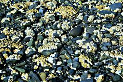 Havet vaggar Arkivfoto