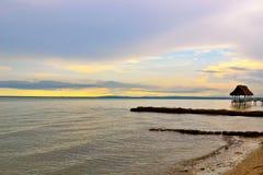 Havflykt Fotografering för Bildbyråer