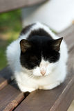 Having a rest cat. Multi-colored cat who has a rest on a bench Royalty Free Stock Images