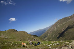 Having a rest on a hiking tour. A mature woman with her dog having a rest during a hiking tour in the summer in the Alps in South Tirol Royalty Free Stock Photography