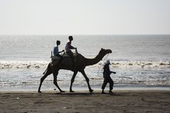 Having ride on camel. stock images