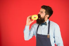 Having snacks. Diet and healthy food. Baker eat doughnut. Chef man in cafe. Calorie. Feel hunger. Bearded baker. Bearded. Man in apron. baker hold donut. Funny stock image