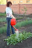 Having watered beds with a radish Stock Photos