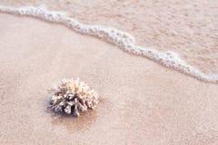 Havkorall på sanden av den tropiska stranden Arkivbilder