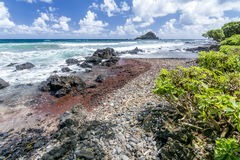 Havkust i Hawaii arkivbild