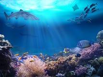 Havliv i en korallrev arkivfoton