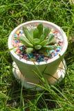 Havorthia onder gras Stock Fotografie