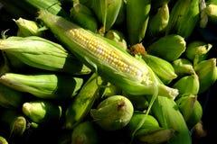 Havre för ny jordbruksprodukter på majskolven organiska Farmer& x27; till salu s-marknad arkivbild