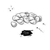 Havre kärnar ur drog vektorillustrationen för högen handen Isolerat grönsak inristat stilobjekt Detaljerad vegetarisk mat stock illustrationer
