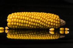 Havre majskolv, guling som är mogen, kopieringsutrymme, mat, svart Arkivfoton