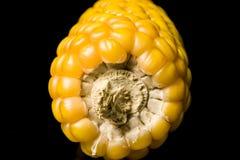 Havre majskolv, guling som är mogen, korn, mat, wellness, Zea maj Royaltyfria Bilder