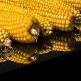 Havre majskolv, multipel, guling som är mogen, korn, mat Arkivfoton