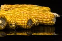Havre majskolv, multipel, guling som är mogen, korn, mat Arkivfoto