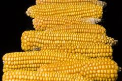 Havre majskolv, multipel, guling som är mogen, korn, mat Royaltyfria Bilder