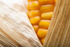 Havre makro, guling, moget som är aptitretande, mat, healt Royaltyfri Fotografi