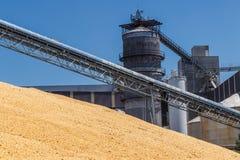 Havre och korn som behandlar eller skördar terminalen Havre kan användas för mat, matning eller Ethanol V Royaltyfri Fotografi
