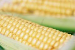Havre på majskolv- och för majsöron bakgrundsslut upp arkivfoton