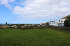 Havrefält, i att växa Royaltyfri Foto