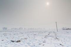 Havrefält i vinter royaltyfria bilder