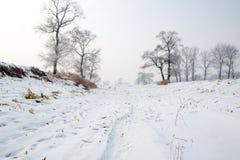 Havrefält i vinter arkivfoton