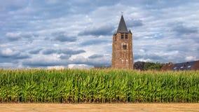 Havrefält med ett kyrkligt torn på bakgrunden mot en blå himmel med moln, Flanders, Belgien Royaltyfri Foto