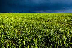Havrefält med mörka himlar royaltyfri fotografi