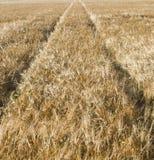 Havrefält med spåret av traktoren Arkivfoton