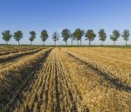 Havrefält med träd Arkivfoto