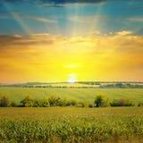 Havrefält och soluppgång på himmel Arkivbilder