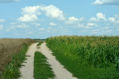 Havrefält och vetefält Arkivfoton