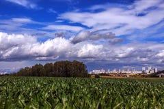 Havrefält på en bakgrund av stadsbyggnader Royaltyfria Bilder