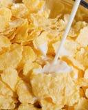 havreflakes mjölkar äta som är sunt Arkivbilder