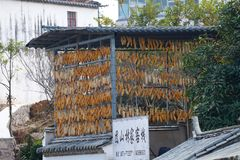 Havremajskolvar i den historiska mitten av byn av Tuanshan Yunnan Kina royaltyfria foton