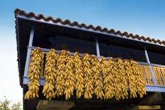 Havremajskolvar som hänger för att torka på balkong royaltyfria foton