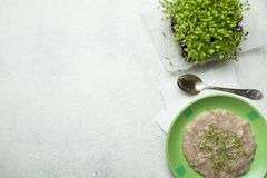 Havremjöl i en grön bunke och mikrogräsplaner på köksbordet, bästa sikt Begreppet av att förminska vikten av sund mat tomt royaltyfri fotografi