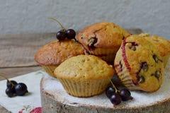 Havremuffin med den svarta vinbäret på en bitande träbakgrund stekhett hemlagat sund mat Arkivfoton