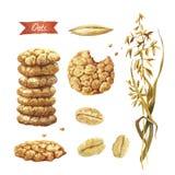 Havreväxt, frö, flingor och kakavattenfärgillustration Arkivfoto