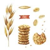 Havreväxt, frö, flingor och kakavattenfärgillustration Arkivfoton