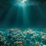 Havs- eller havhavsbotten med korallreven slapp undervattens- sikt för blåa färger arkivbild