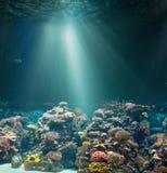 Havs- eller havhavsbotten med korallreven slapp undervattens- sikt för blåa färger royaltyfria bilder