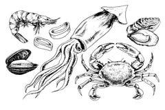 Havs- hand dragen samling Arkivfoto