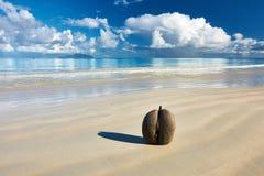 Havs kokosnötter (coco de mer) på stranden på Seychellerna Arkivfoton