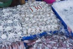 Havs- marknad för tioarmad bläckfisk i Thailand Royaltyfri Foto