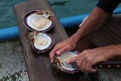 Havs- maträtt som göras nästan arkivbild