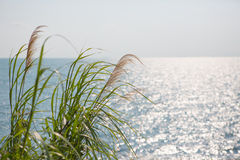 Havs- och gräsbakgrund Arkivfoto