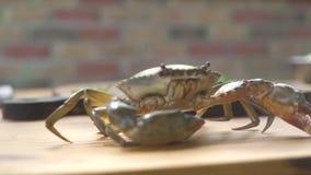 Havs- restaurang Levande krabba på köksbordet för att laga mat Havskrabba i lyxig havs- restaurang Ny ingrediens för lager videofilmer